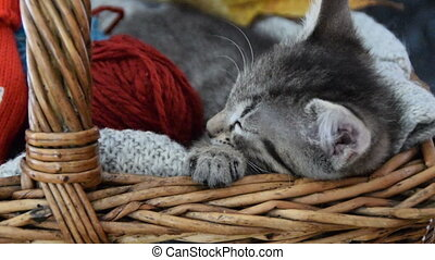 Cat with a ball of wool,sleeping in the basket
