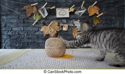 Kitten playing with rope
