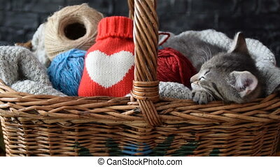 Kitty gift basket Gift for any celebration,for the person...