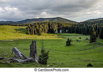 Green meadows Romania - Lan dscape with forests. Nature in...