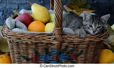 Sleepy cat stretches in the basket