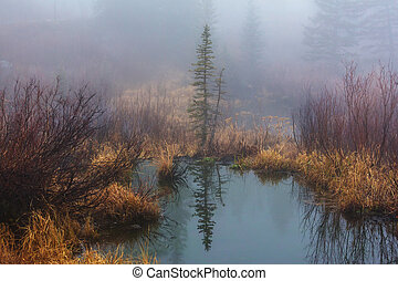 Fog on the lake - Misty mountain lake in the early serene...
