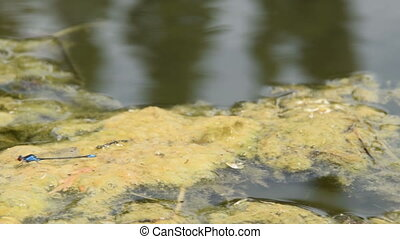 Beautiful Dragonfly on the water surface