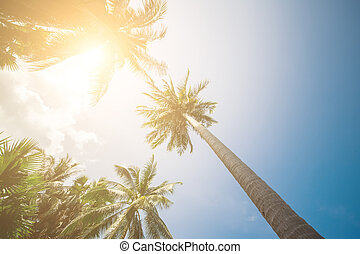 Palm Trees Sun Light Hot Equator Nature Landscape Tropical Background Holiday Travel Design Toned