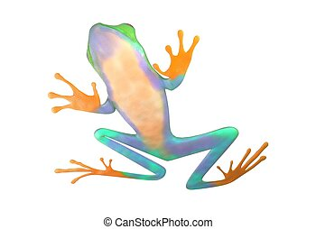 red eyed tree frog from tropical rainforest of Costa Rica...