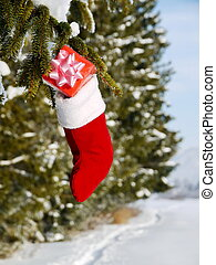 santa sock hanging on a tree - Christmas sock with gifts on...