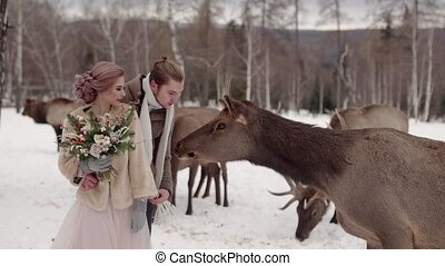 guy and a girl tease a deer HD