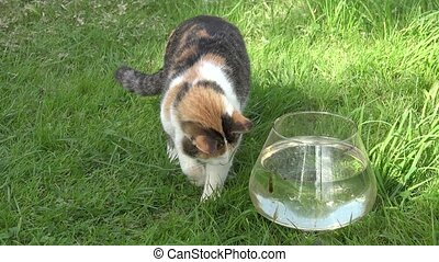 Cute cat try to catch fish from plastic bowl with water and...