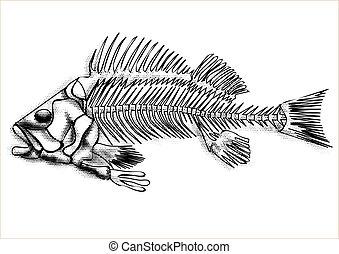 black fish skeleton isolated on the white background