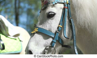 White little horse is dressed for the holiday - The white...