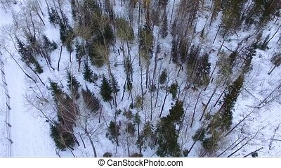 deer in winter forest aerial footage