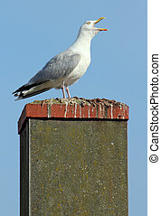 Noisy seagull with its beak wide open on a chimney.