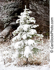 Prefect little Christmas tree with snow in nature - Small...