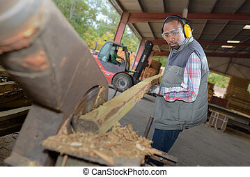 Man at work in sawmill