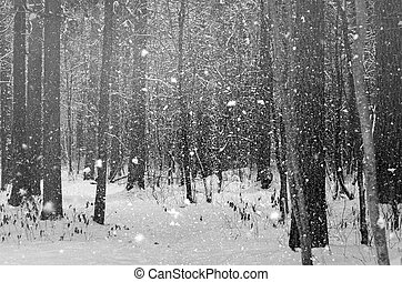 Trees in winter forest - The trees in winter forest close up