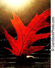 leaf in autmnal color in back light