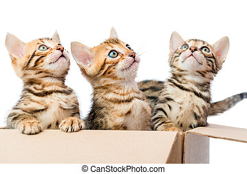 Kittens sit in a cardboard box and looking up