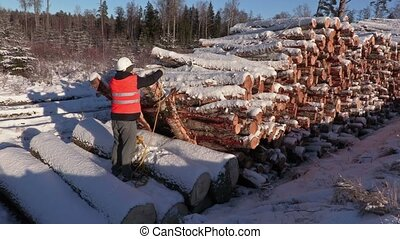 Lumberjack fix rope and call for workers near pile of logs...