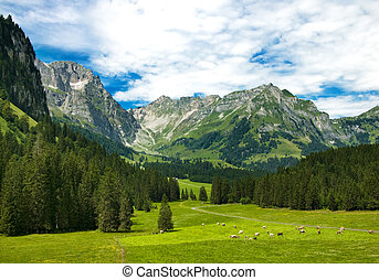 Alps meadow in Switzerland - Alpine meadow in central...