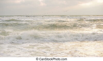 migratory birds flying over the sea - migratory birds fly...