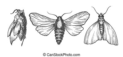 Hand drawn set of moths in different poses. Set of isolated...