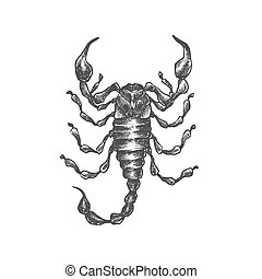 Hand drawn vector scorpion. Isolated vector insects...