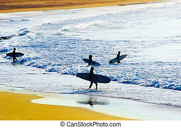 Surfing at sunset - Group of surfers going to surf in the...