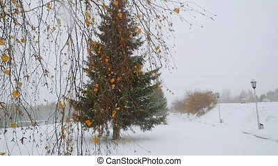 Park alley tree beautiful way winter during deep snowfall in...