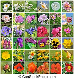 coloful flowers collection - collection of colorful flowers...