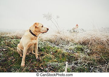Frosty day with dog. Labrador retriever on the walk in rural...