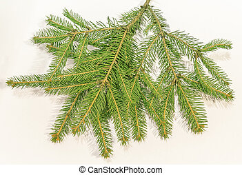 Christmas tree branches over white background