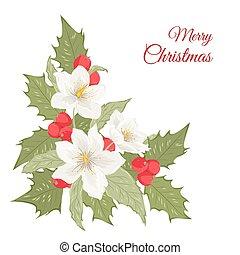 Hellebore flowers mistletoe holly berries isolated -...