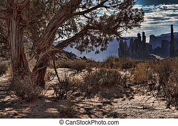 Monument Valley Tree - An old gnarly tree in Monument Valley...
