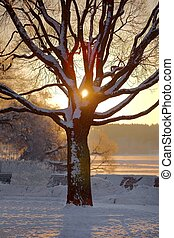Winter tree sunset