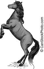 Wild horse stallion rearing in rage