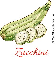 Zucchini squash vegetable vector isolated sketch - Zucchini...