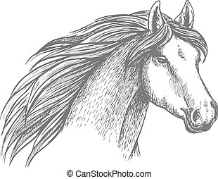 Horse head sketch of purebred arabian mare - Sketched horse...