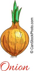 Onion vegetable with green leaf sketch. Yellow onion bulb...