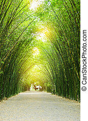 Tunnel bamboo trees. - Tunnel bamboo trees and walkway
