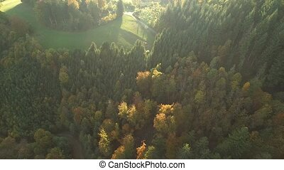 black forest at autumn - aerial view of black forest...