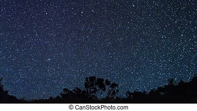 Starry sky behind the trees. Zoom. Time Lapse
