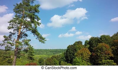 forest under bluse sky timelapse - green forest under bluse...