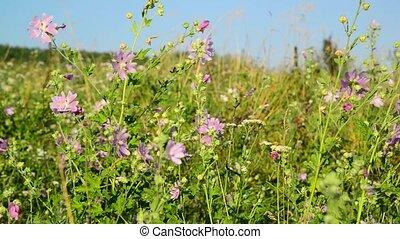 Pink flower swaying in Meadow - Pink flower swaying in the...