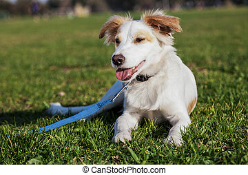 Mixed Breed Dog Portrait in the Park