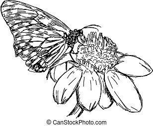 illustration vector doodles hand drawn daisy flower with butterfly.