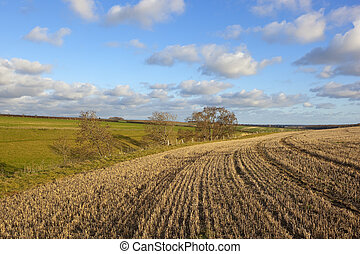 yorkshire wolds pastures - a yorkshire wolds agricultural...