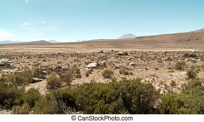 Lama Vicugna Sign, Andes, Peru