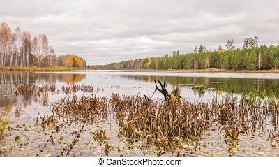 Rotten snag in the pond. Autumn, Russia. Time Lapse. UltraHD...