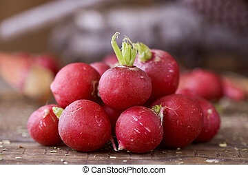 small european radishes - closeup of a bunch of small...