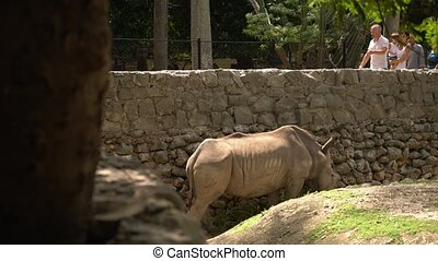 Group Of People Looking At Rhino Eating Grass In Zoo Cage -...